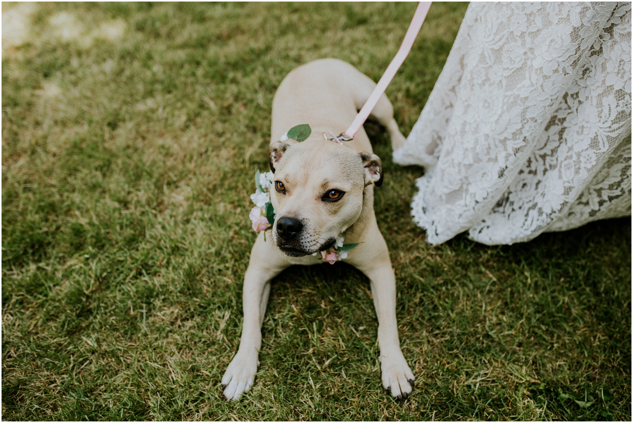 dog with floral collar at wedding